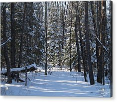 Winter Scene1 Acrylic Print by Susan Crossman Buscho