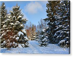 Acrylic Print featuring the photograph Winter Scenery by Teresa Zieba