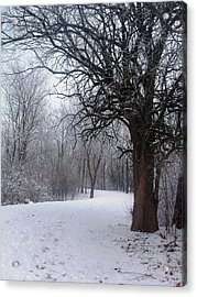 Winter Serenity Acrylic Print by Teresa Schomig