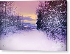 Winter Skies Acrylic Print by Tara Turner