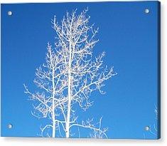 Winter Sky Acrylic Print
