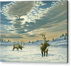 Winter Sky-elk   Acrylic Print by Paul Krapf
