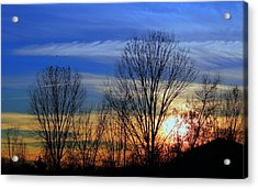 Winter Sky Acrylic Print by Rima Biswas