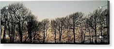 Winter Skyline Acrylic Print