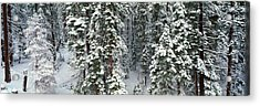 Winter Snowstorm In The Lake Tahoe Acrylic Print