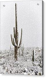 Winter Sonoran Style  Acrylic Print by Saija  Lehtonen