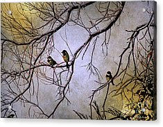Winter Sparrow Dawn Acrylic Print by Barbara Chichester