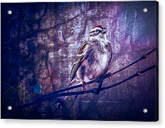 Winter Sparrow Acrylic Print