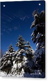 Winter Spruce Acrylic Print by Steven Valkenberg