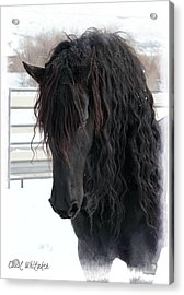Winter Stallion Acrylic Print