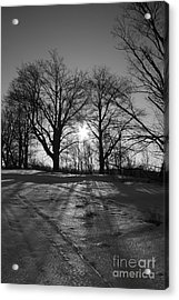Winter Sun  Acrylic Print by Simon Jones