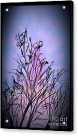 Winter Sunrise Acrylic Print by Judy Via-Wolff