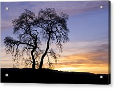Acrylic Print featuring the photograph Winter Sunrise With Tree Silhouette by Priya Ghose