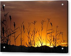Winter Sunrise Acrylic Print by Tammy Espino