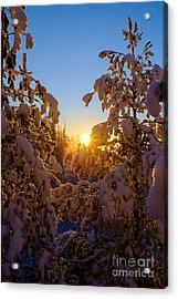 Winter Sunset Behind The Trees Acrylic Print