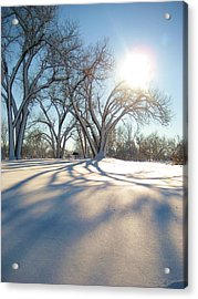 Winter Sunshine Acrylic Print by Alicia Knust
