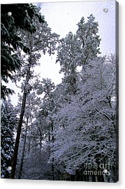 Winter Surprise Acrylic Print