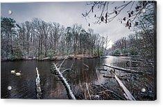 Winter Swans Acrylic Print