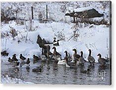 Winter Swimming Hole Acrylic Print by Deborah Benoit