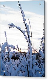 Winter Acrylic Print by Terry Reynoldson