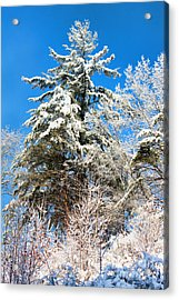 Winter Time Acrylic Print by Lena Auxier