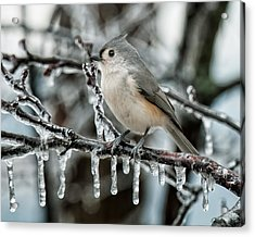 Winter Titmouse Acrylic Print by Lara Ellis