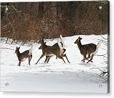 White Tailed Deer Winter Travel Acrylic Print