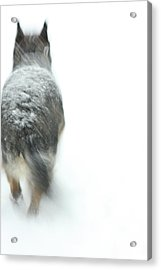 Winter Traveler Acrylic Print by Karol Livote