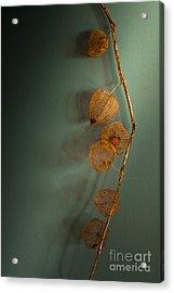 Winter Treasures Acrylic Print by Jan Bickerton