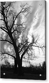 Winter Tree Acrylic Print by Alicia Knust