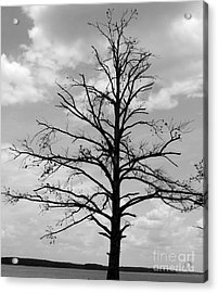 Acrylic Print featuring the photograph Winter Tree by Andrea Anderegg