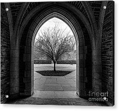 Winter Tree At Duke University Acrylic Print by Emily Kay