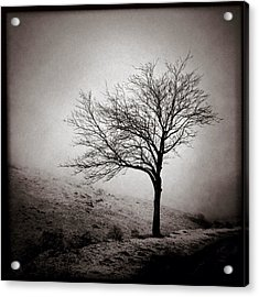 Winter Tree Acrylic Print by Dave Bowman