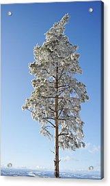 Winter Tree Germany Acrylic Print