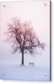 Winter Tree In Fog At Sunrise Acrylic Print by Elena Elisseeva