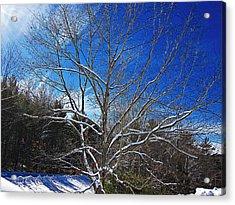 Winter Tree On Sky Acrylic Print
