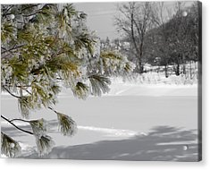 Winter Tree  Acrylic Print by Paulina Szajek
