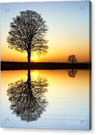 Winter Tree Reflections Acrylic Print by Tim Gainey