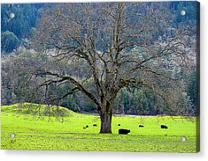 Winter Tree With Cows By The Umpqua River Acrylic Print by Michele Avanti