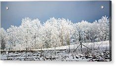 Winter Treeline Panorama Acrylic Print by John Haldane