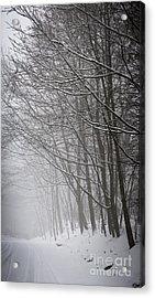 Winter Trees Along Snowy Road Acrylic Print by Elena Elisseeva