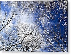 Winter Trees And Blue Sky Acrylic Print by Elena Elisseeva