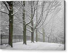 Winter Trees And Road Acrylic Print