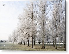 Acrylic Print featuring the photograph Winter Trees by David Isaacson