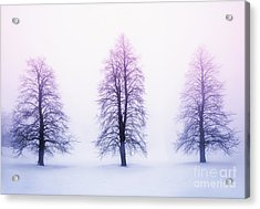 Winter Trees In Fog At Sunrise Acrylic Print