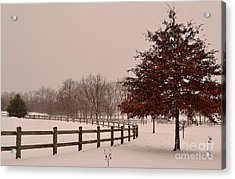 Winter Trees In Park Acrylic Print