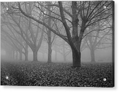 Winter Trees In The Mist Acrylic Print by Georgia Fowler