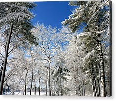 Acrylic Print featuring the photograph Winter Trees by Janice Drew