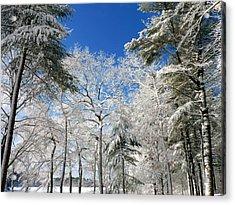 Winter Trees Acrylic Print by Janice Drew