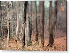 Winter Trees Acrylic Print by Kim Fearheiley